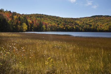 Peat bog on shore of Russell Pond in the White Mountains near Woodstock, New Hampshire, with autumn foliage along the shoreline.