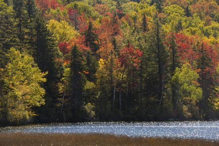 Peat bog on shore of Russell Pond in the White Mountains of New Hampshire, near Woodstock, with close view of bright autumn foliage along the shoreline, no sky. Reklamní fotografie