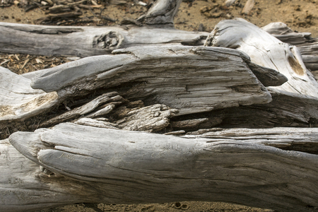 county somerset: Closeup of a bleached driftwood log on the sandy beach of Flagstaff Lake in northwestern Maine. Stock Photo