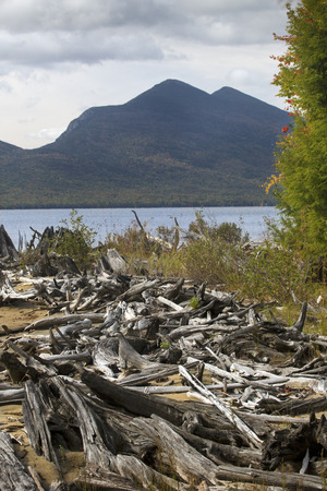 county somerset: Driftwood at Flagstaff Lake, with mountains of the Bigelow Range in Somerset County, northwestern Maine, vertical image.