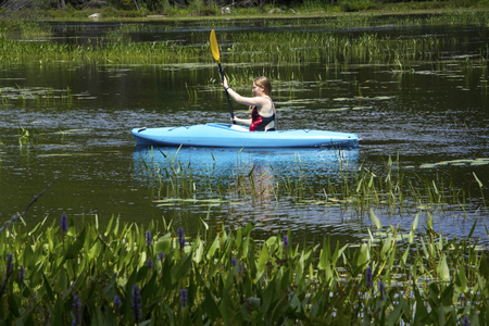 pickerel: Young woman in blue kayak, paddling left through pickerel weeds on Mud Pond in Sunapee, New Hampshire, on a sunny day, horizontal image.