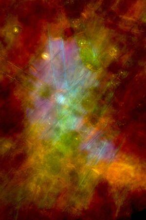 plancton: micrograf�a de polarizaci�n Extracto de algas de agua dulce estanque de Connecticut, tomada en 200x. de color rojo oscuro con el centro azul y verde. Foto de archivo