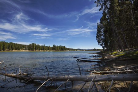 deadwood: Banks and water of the Yellowstone River in Hayden Valley, Yellowstone National Park, Wyoming, on a sunny day with blue skies and deadwood. Stock Photo