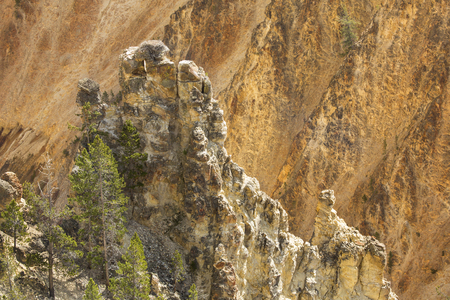 eagle nest rock: Eagles nest on top of near wall of a steep drop into the Grand Canyon of the Yellowstone River, with yellow cliffs on the opposite shore.