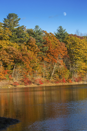 calm water: Brilliant fall foliage on the shoreline of Mansfield Lake in Connecticut, with reflections on the calm water, and the moon rising above in a blue sky. Stock Photo