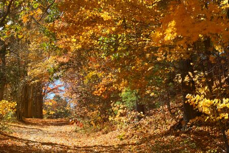northeast: Tunnel of deciduous trees in fall foliage along a dirt road in a Mansfield Hollow forest, Connecticut. Stock Photo