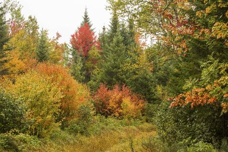 north woods: Rainy day fall foliage on the shoreline of Sturdevant Pond in Magalloway, Maine, part of the Rangeley Region of wilderness forests in the northwestern part of the state. Stock Photo