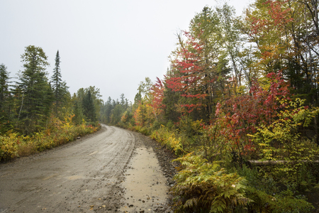 north woods: Muddy dirt road and fall foliage in the backwoods of Maine, through the Great North Woods near Rangeley.