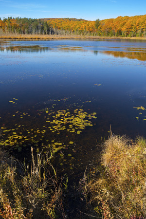 encircling: Fall foliage on the shoreline encircling Pond Hill Pond in Norfolk, Connecticut, with blue skies on a sunny day in October. Stock Photo