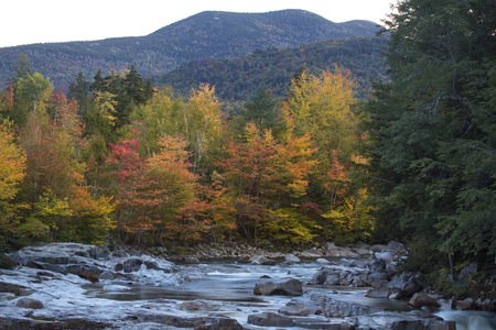 national forest: Fall foliage and rapids at Rocky Gorge of the Swift River, with mountains in the background, in the White Mountains National Forest in northern New Hampshire.