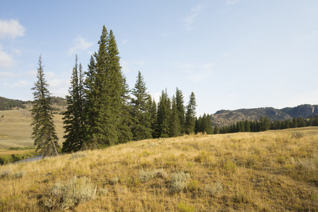 sagebrush: Open forest and sagebrush scrubland, with small grove of pine trees on mountain ridges in Yellowstone National Park, Wyoming.