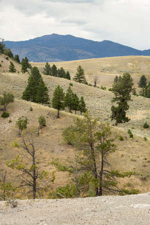 sagebrush: Open forest and sagebrush scrubland on mountain ridges in Yellowstone National Park, Wyoming.
