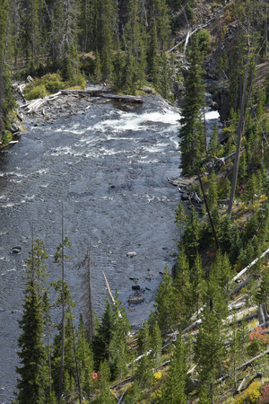 lower yellowstone falls: Tower Creek from trail above, showing lower falls, Yellowstone National Park, Wyoming, vertical image.