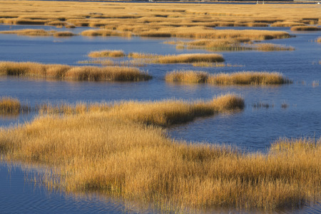 Abstract patterns at sunset of grasses in the fall marshes of the Charles E. Wheeler wildlife area near the mouth of the Housatonic River at Milford Point, Connecticut. Stock Photo