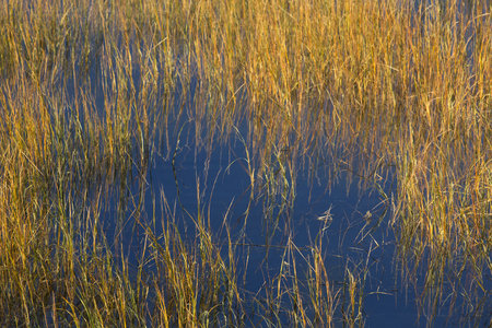 밀 포드 포인트, 코네티컷에서 Housatonic 강 입 근처 찰스 E. 윌러 야생 동물 지역에서 습지 잔디의 근접 촬영.