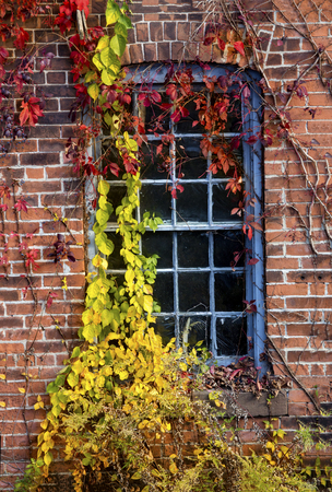 Yellow vines grow over a window of the old Collins axe factory in the Collinsville section of Canton, Connecticut.