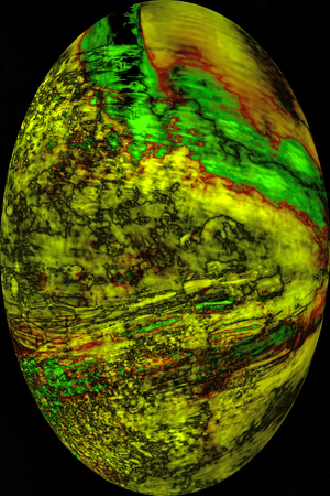 Abstract, yellow and green moss leaves in oval vignette on black background, resembling an egg in digitally manipulated micrograph at 100x.