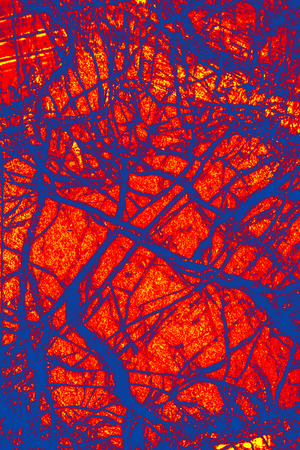 blue vessels: Web of blue vessels over a bright red background in abstract micrograph of peridotite rock, at 40x with polarization.