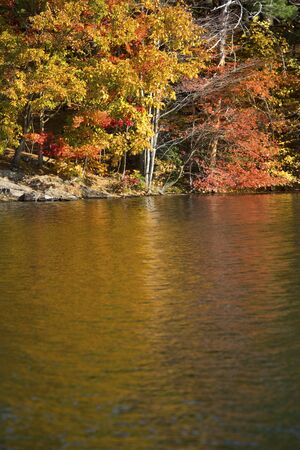 Vibrant autumn colors in the forest along the shore of West Hartford Reservoir in Connecticut.