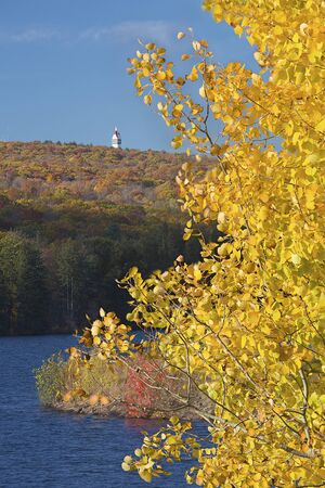 aspen leaf: Vivid yellow aspen foliage on shore of West Hartford Reservoir in Connecticut, with the Heublein Tower in the background.