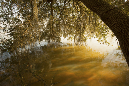 Branches and moss of an oak tree draped over still waters of Lake Marion in Santee National Wildlife Refuge in Summerton, South Carolina.