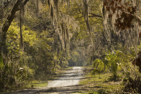 Live oak trees draped with Spanish moss make for an iconic scene from the deep South in the backcountry of Harris Neck National Wildlife Refuge in McIntosh County, Georgia.