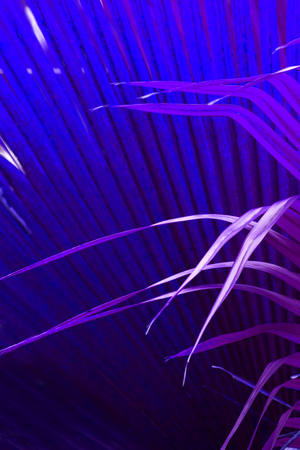 photosynthetic: Delicate purple leaf tips cross against a blue fan pattern of abstract palmetto leaves from south Florida.