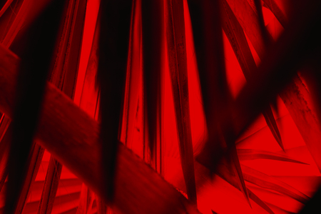 Sharp, dark leaf blades penetrate like daggers into a glowing red interior in this abstract of palm leaves from south Florida.