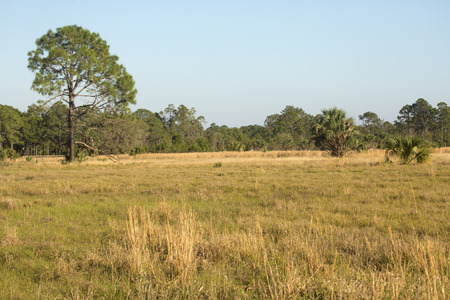 Florida scrub habitat in early springtime at Lake Kissimmee State Park in Lake Wales.