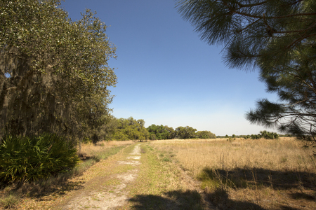 Dirt road winding through Florida scrub habitat in early springtime at Lake Kissimmee State Park in Lake Wales.