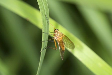 Yellow hoverfly on a blade of grass at the Belding Wildlife Management Area of Vernon, Connecticut. Stock Photo