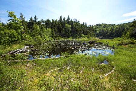 Peat bog at the south end of Lake Solitude on a sunny summer day, near the summit of Mt. Sunapee in Newbury, New Hampshire.