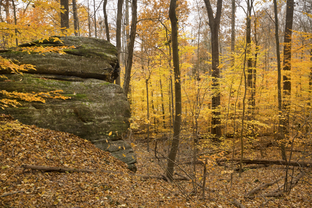 Golden fall foliage and rock ledge in late autumn woods of Cuyahoga Valley National Park near Cleveland, Ohio.
