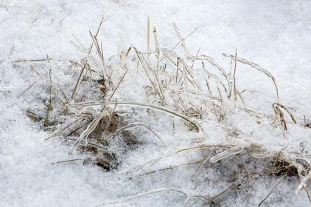 Grass coated with ice in a meadow following an ice storm in East Windsor, Connecticut.