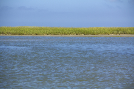 Marsh grasses, Ammophila, with a salt line and exposed peat deposits in Salt Pond Bay of Cape Cod National Seashore.