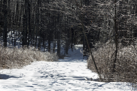 Snowy trail lined by trees and wildflowers coated by an ice storm at Valley Falls Park in Vernon, Connecticut in winter.