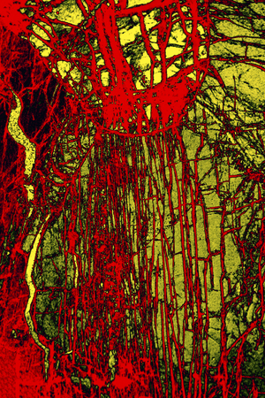 Red and yellow, abstract micrograph of the mineral olivine pyroxenite, viewed with a polarizing microscope at 100x and digitally manipulated in post-processing.