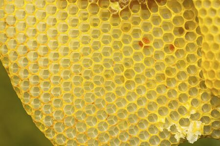 Closeup of the yellow,  geometric cells of a honeycomb, at The Fells in Newbury, New Hampshire. Foto de archivo - 130852973