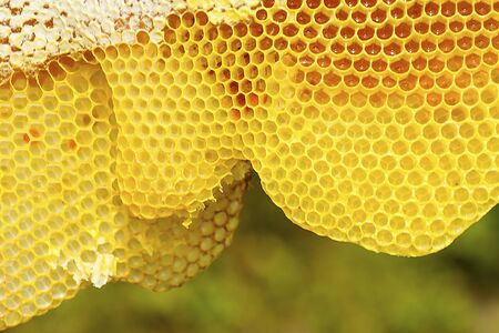 Closeup of the yellow,  geometric cells of a honeycomb, some filled with honey, at The Fells in Newbury, New Hampshire.