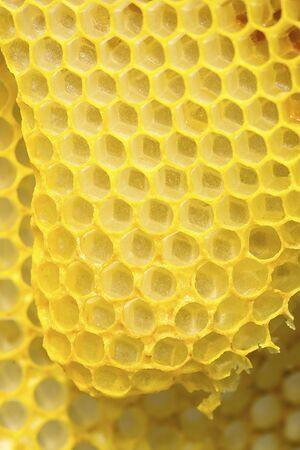 Closeup of the yellow,  geometric cells of a honeycomb, at The Fells in Newbury, New Hampshire.