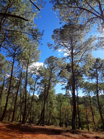 tigre: beautiful green forest Stock Photo