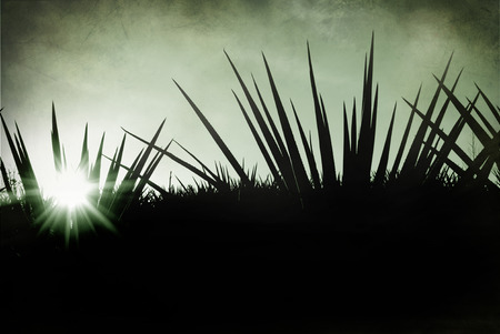 Mexico tequila lanscape