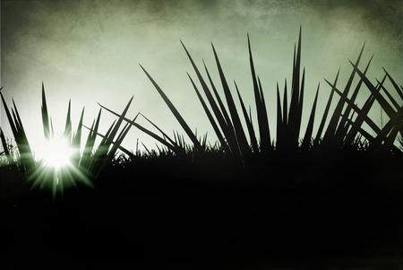 lanscape: Mexico tequila lanscape