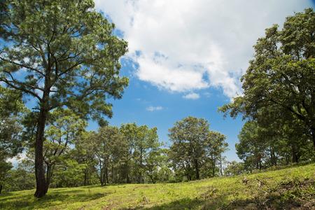 tigre: beautiful green forest. Mexico, mountain landscape.