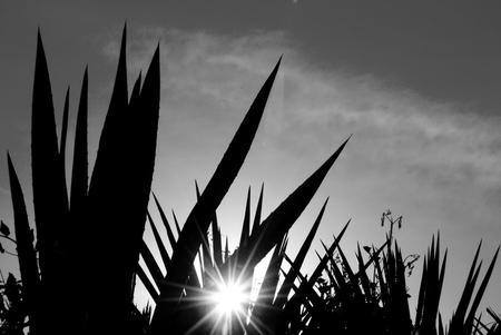 ry: Agave landscape Stock Photo