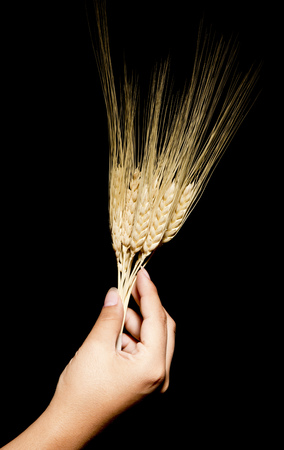 reverent: Hands with offering wheat
