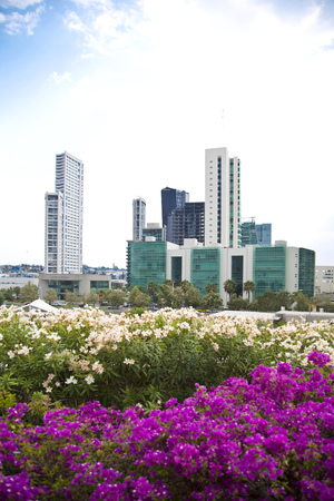 guadalajara: Several tall buildings and flowers in first place. Guadalajara, Jalisco, Mexico