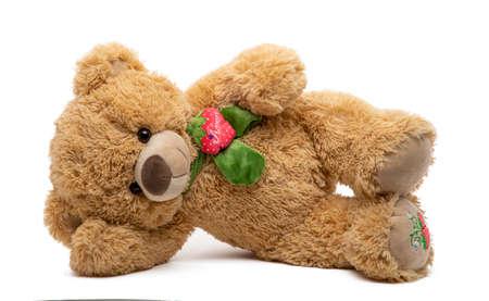 Teddy bear lying soft toy in white background