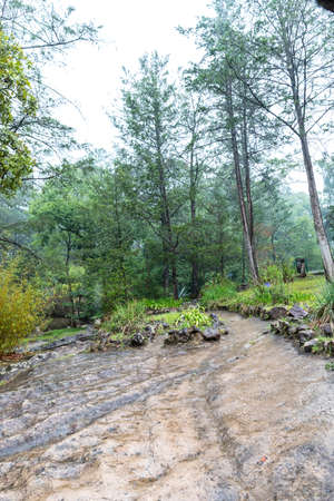 Beautiful green forest in Mazmitla. Mexico, mountain landscape.