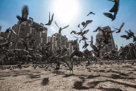 palomas volando: Las palomas volando en movimiento borroso, paisaje urbano en el fondo